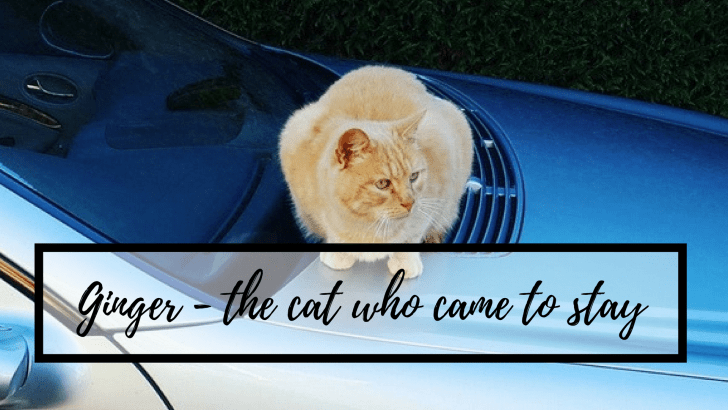 Ginger – the cat who came to stay