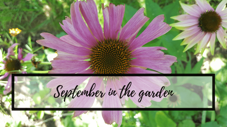 September in the garden