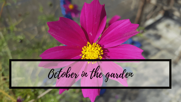 October in the garden