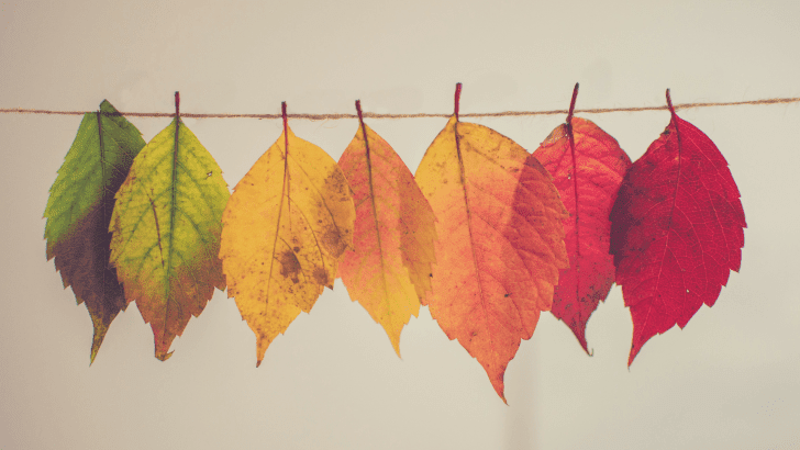 The Anti-Autumn post – what I don't like about Autumn!