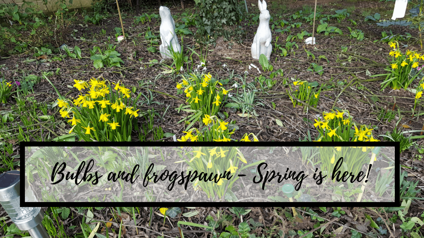 Bulbs and frogspawn – Spring is here!