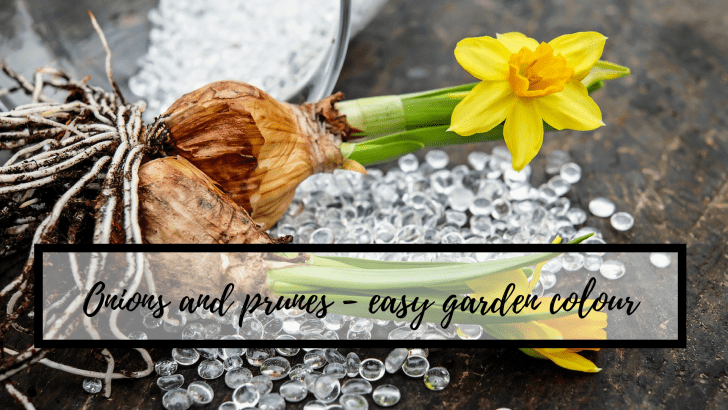 Onions and prunes – how to get easy garden colour