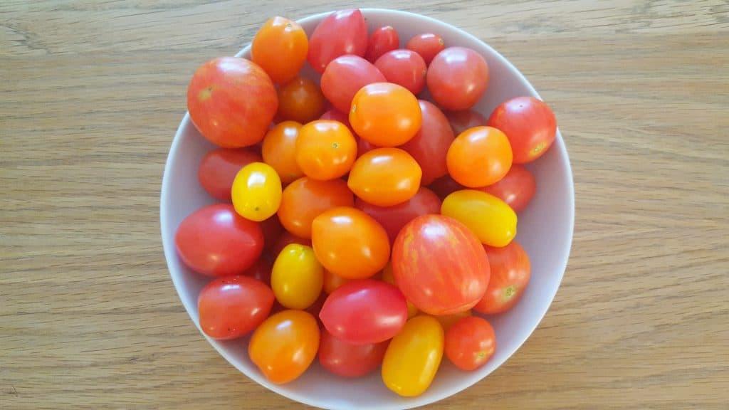 Tomatos-October-in-the-garden