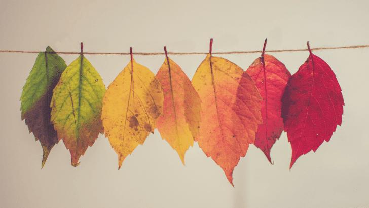 the-anti-autumn-post_lisasnotebook