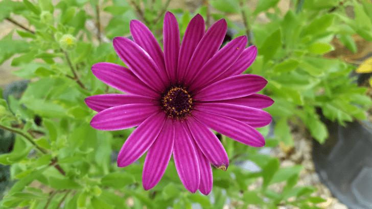 November-in-the-garden-www.lisasnotebook.com