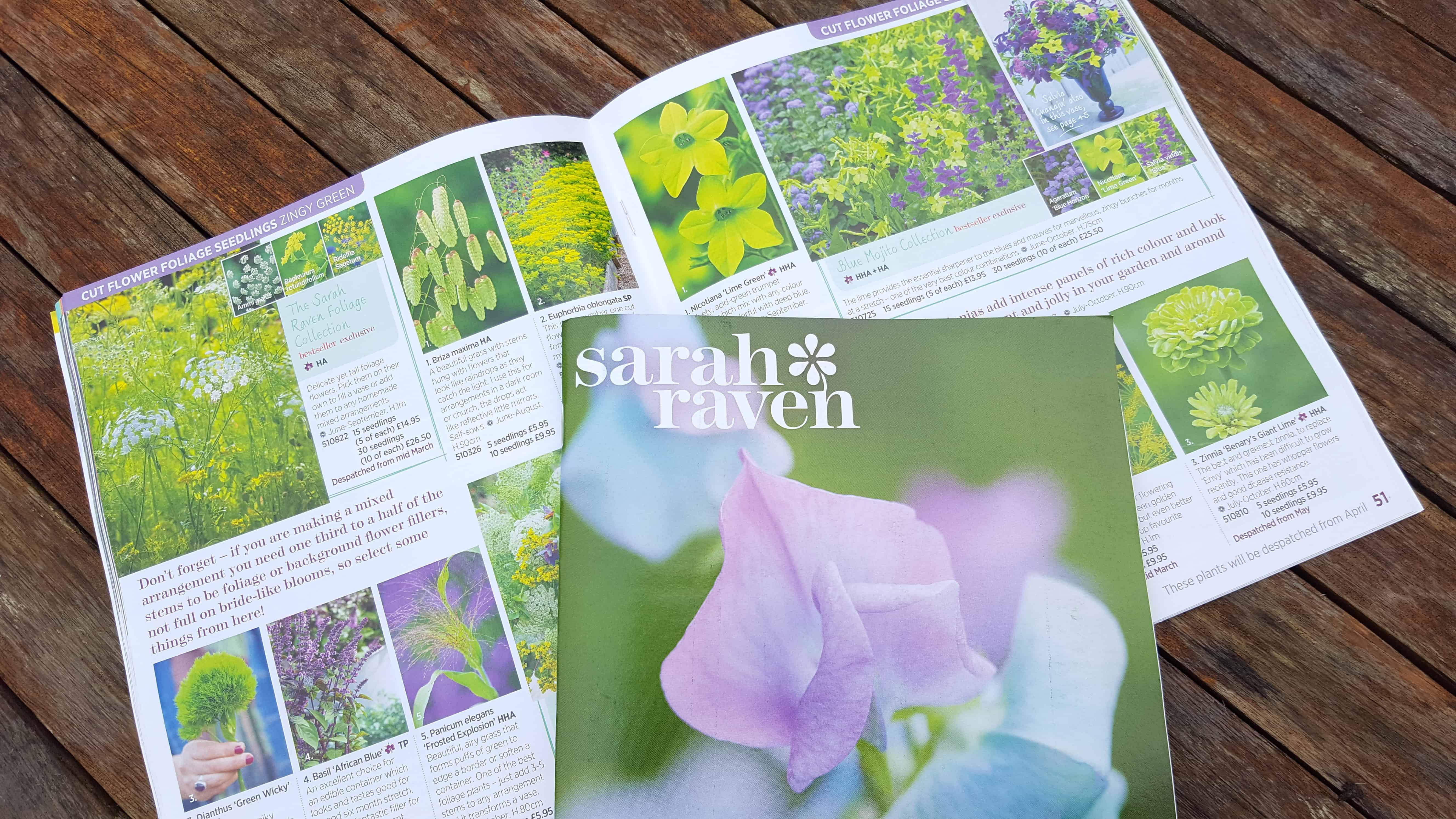 January-in-the-garden_-www.lisanotebook.com