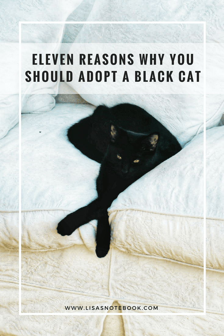 Eleven-reasons-why-you-should-adopt-a-black-cat_www.lisasnotebook.com