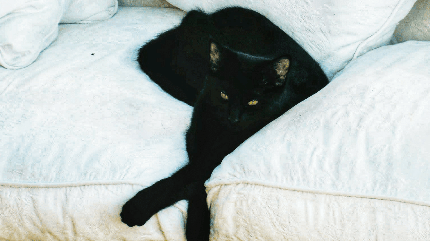 Eleven reasons why you should adopt a black cat