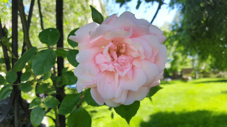 June in the garden