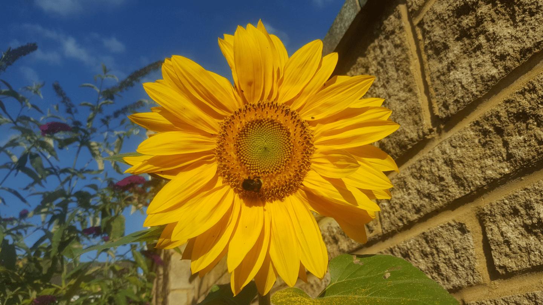 August in my garden