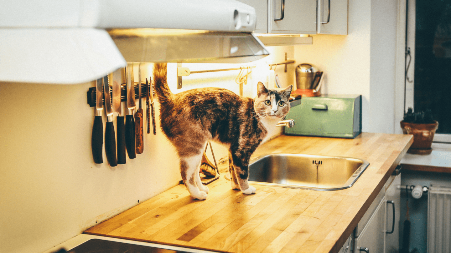 Four must-know tips on buying new appliances for your home *