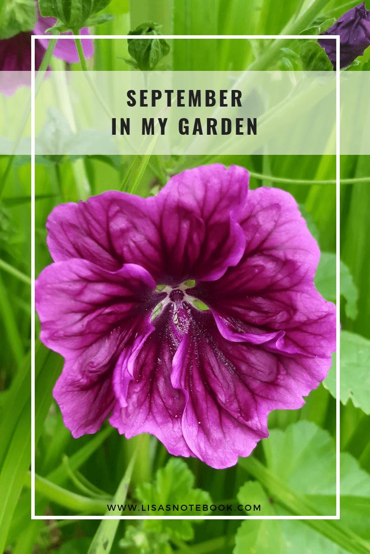 September-in-my-garden