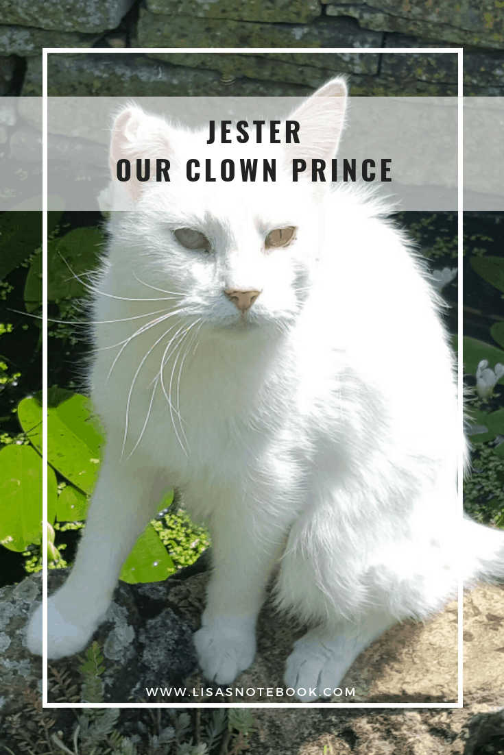 jester-our-clown-prince-my-pet-story-with-petplan