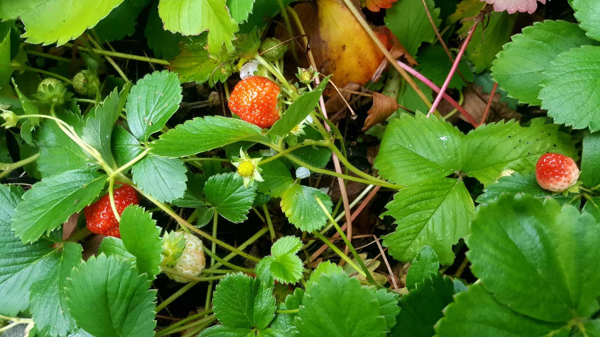 september-in-my-garden_03