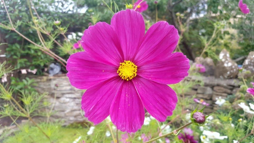 september-in-my-garden_04