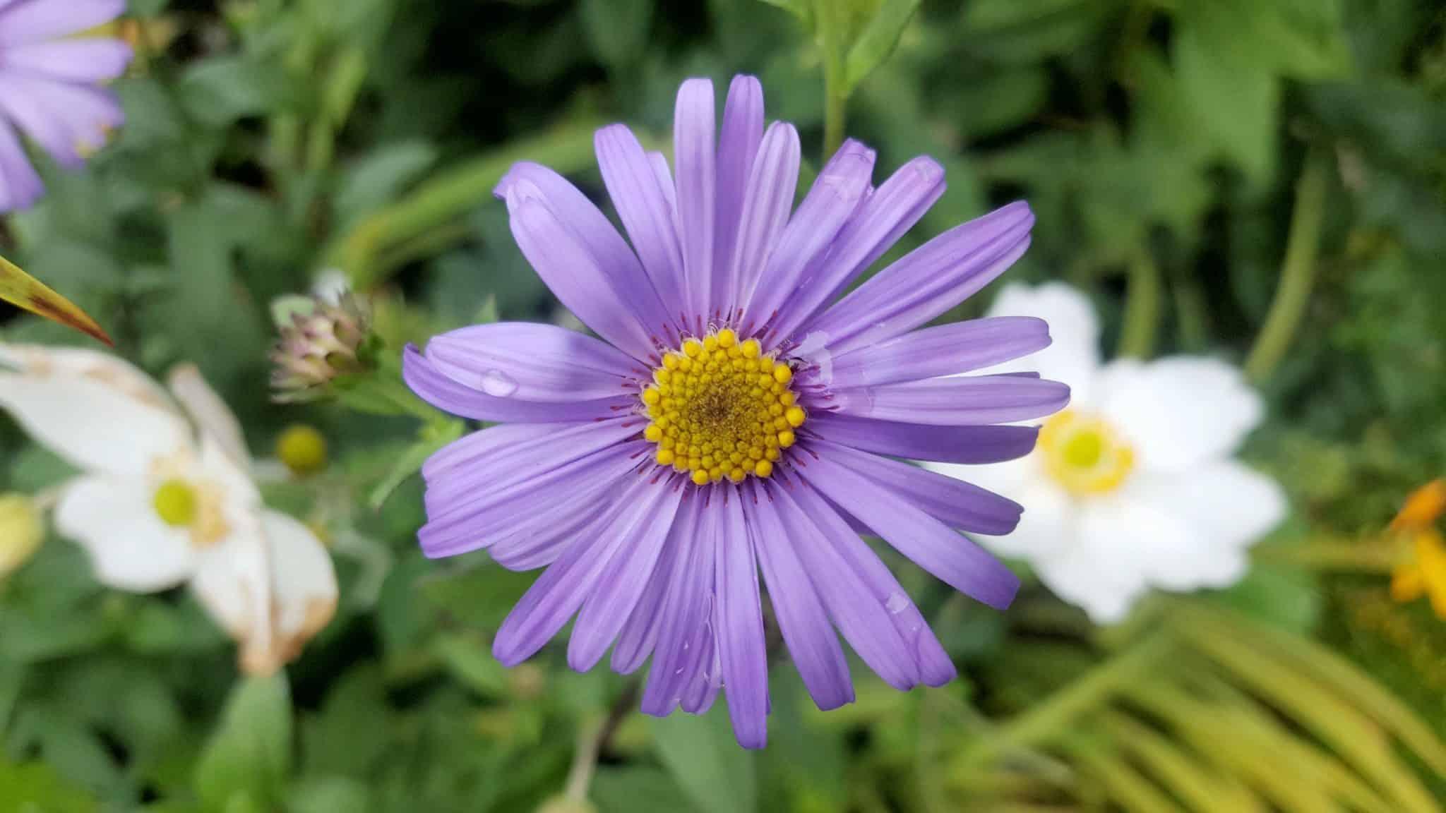 eptember-in-my-garden_11