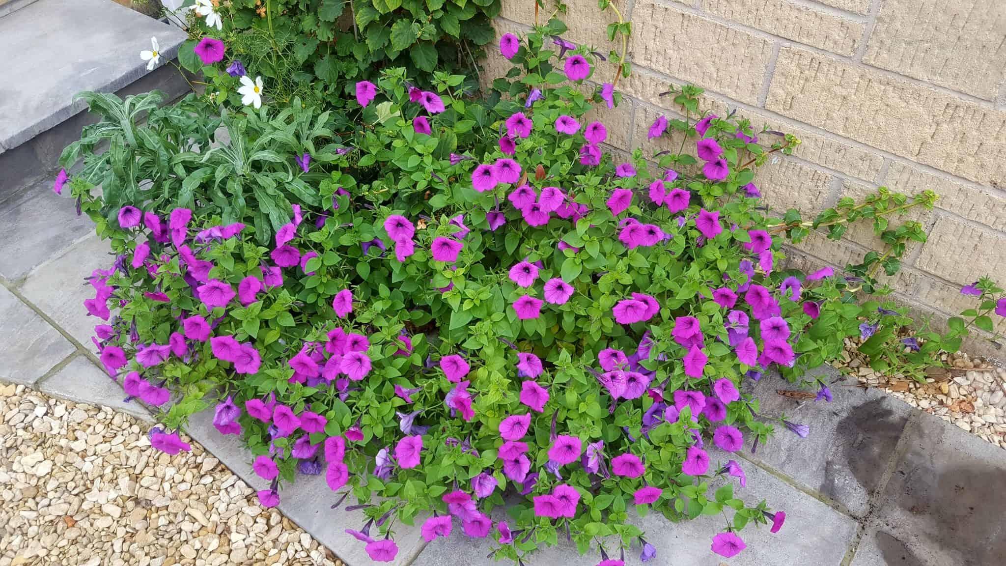 september-in-my-garden_18