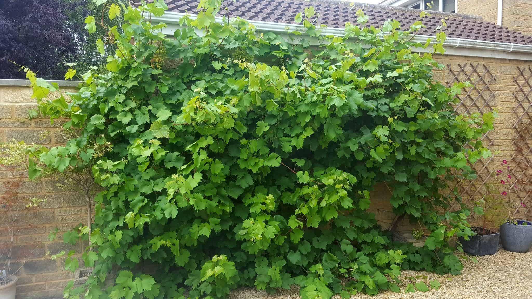 september-in-my-garden_21