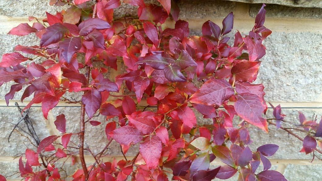 November-in-my-garden