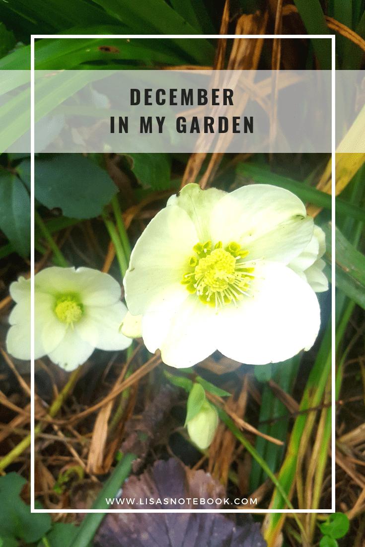 December-in-my-garden