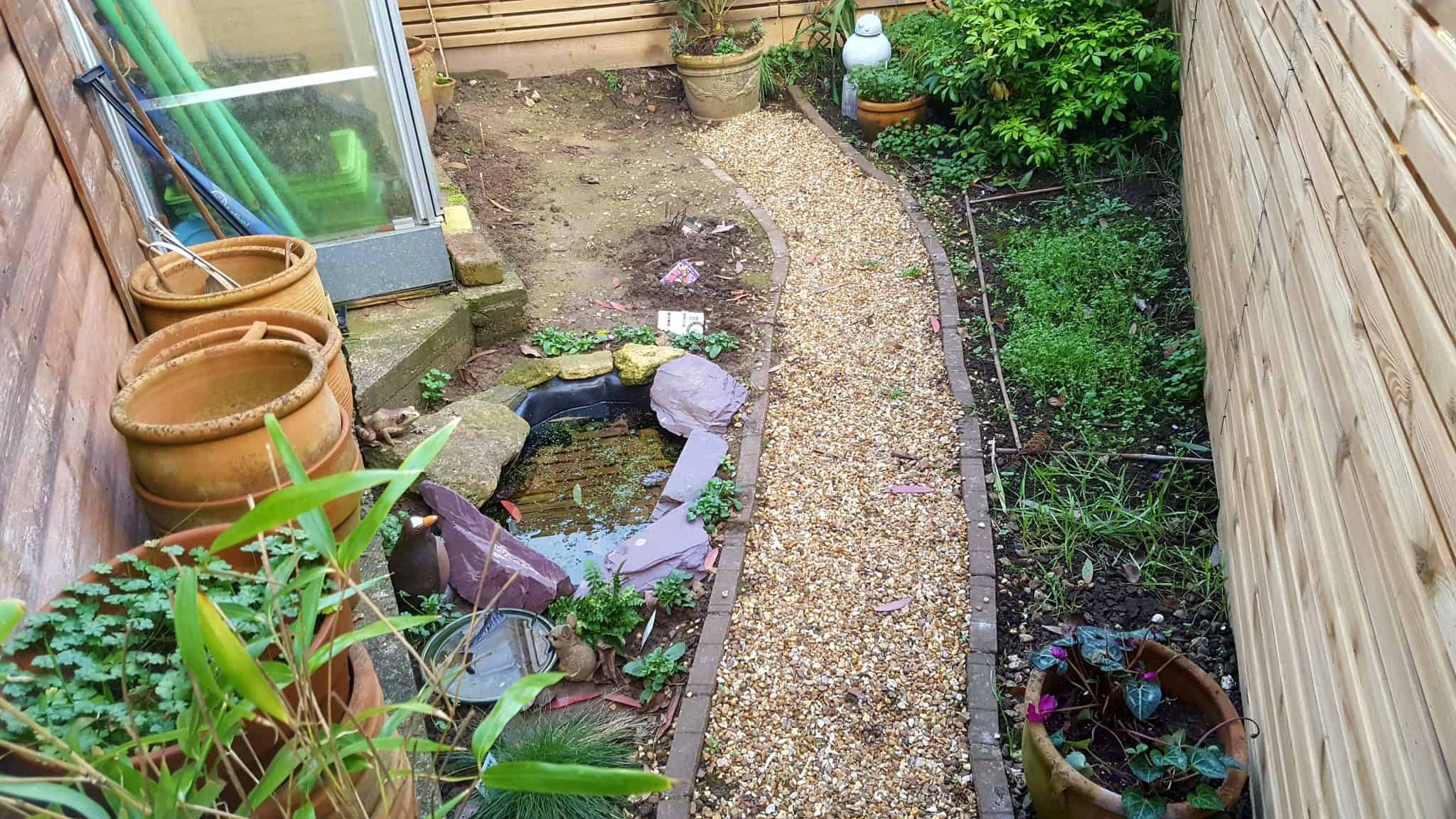 January-in-my-garden
